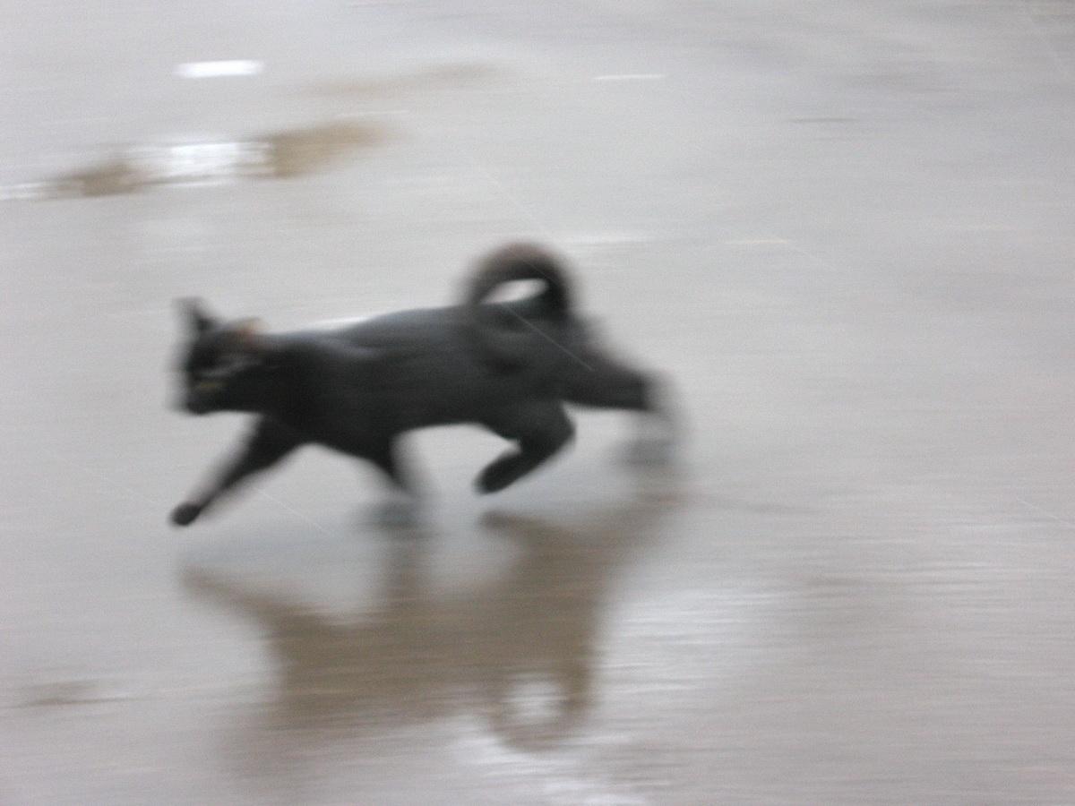 Слова жил да был чёрный кот за углом