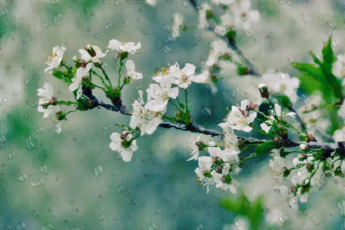 Весенний дождь алина гросу весенний